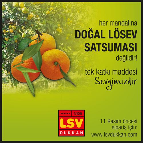 LÖSEV123