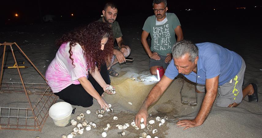 Antalya'da 2020 yılında 204 bin 591 yavru caretta denizle buluşturuldu