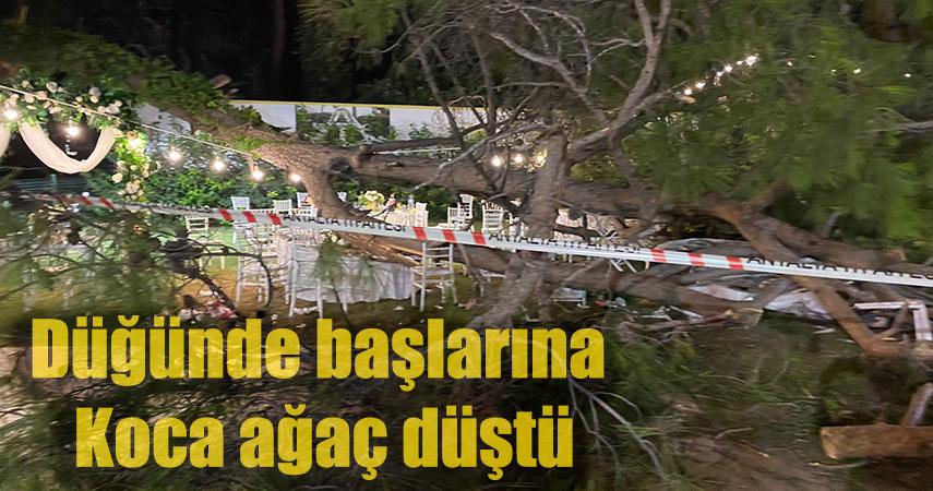 Düğün sırasında ağaç devrildi: 1 ölü, 7 yaralı