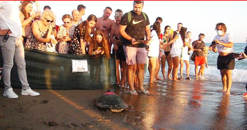 Tedavisi tamamlanan deniz kaplumbağaları yaşam alanlarına bırakıldı